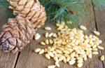 Кедровые орехи польза и вред для беременных – польза или вред. Можно ли кушать?